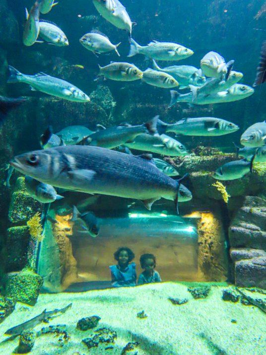 aquarium-la-rochelle-visiter-week-end-famille-5