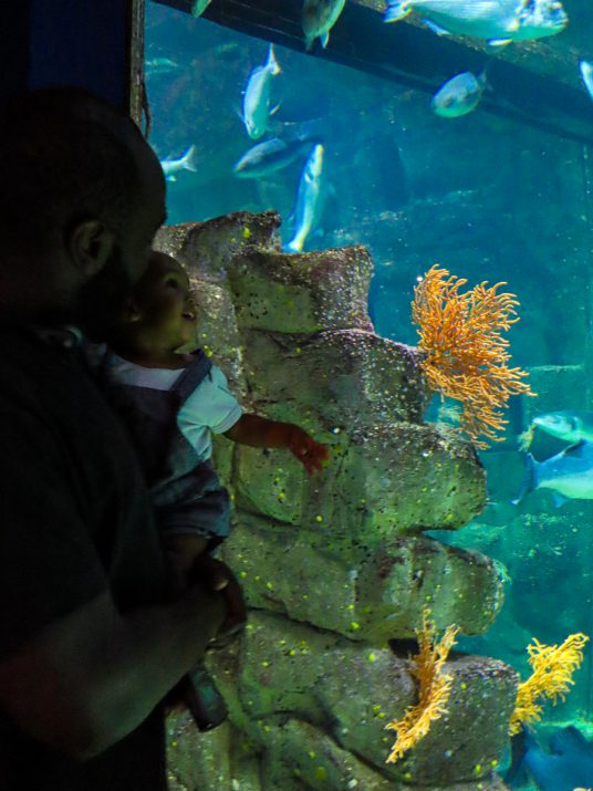 aquarium-la-rochelle-visiter-week-end-famille-6