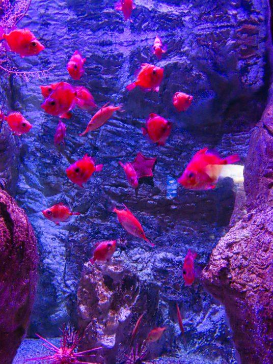 aquarium-la-rochelle-visiter-week-end-famille-8