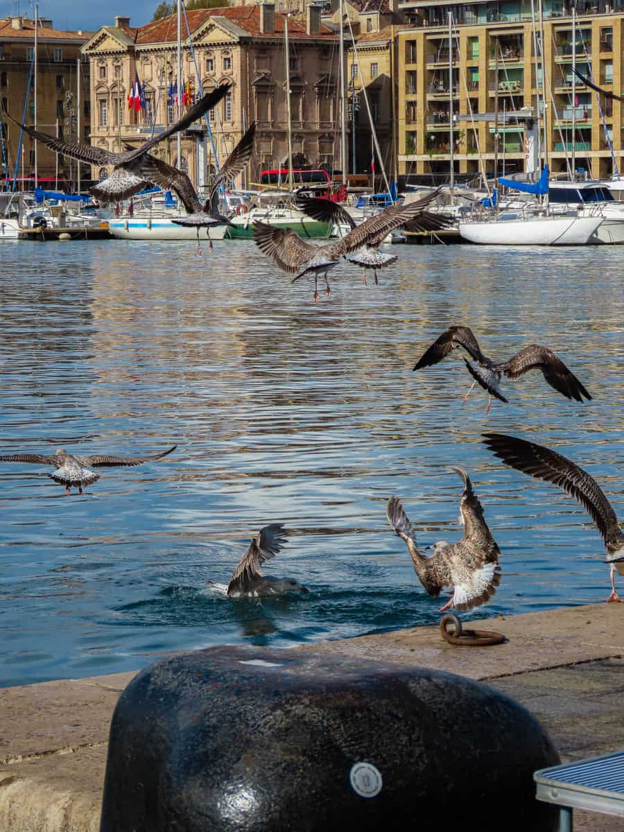 marseille-week-end-vacances-famille-adresses-38