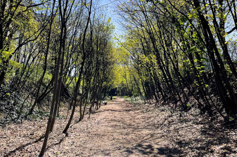 Balade sur la Petite Ceinture du 16ème : le Sentier Nature