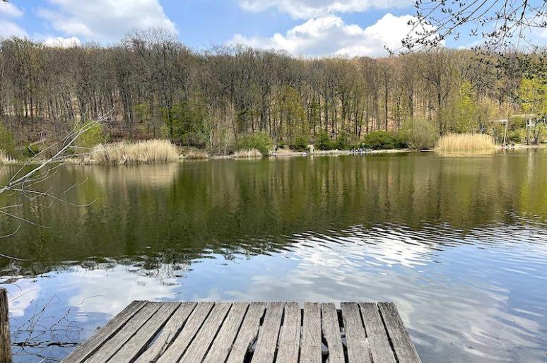 Promenade dans la forêt de Meudon et de ses 4 étangs