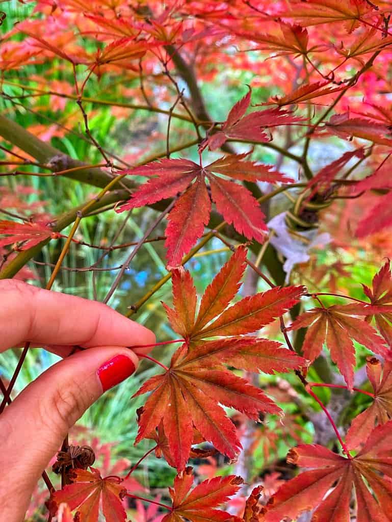 parc-amitie-jardin-japonais-rueil-malmaison-balade-autour-paris-07