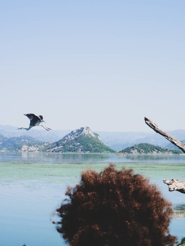 lac-skadar-montenegro-road-trip-famille-voyage-12