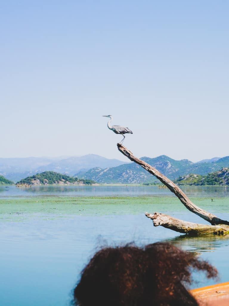 lac-skadar-montenegro-road-trip-famille-voyage-13