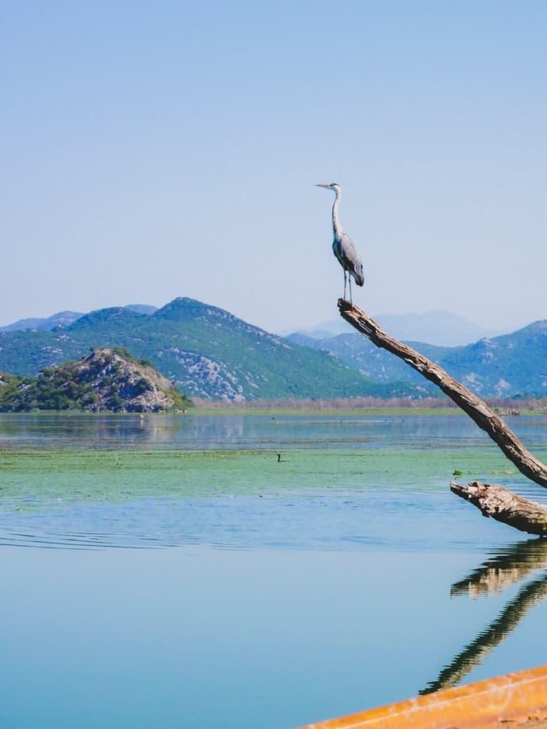 lac-skadar-montenegro-road-trip-famille-voyage-14
