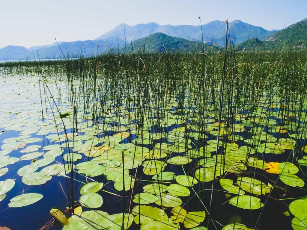 lac-skadar-montenegro-road-trip-famille-voyage-15